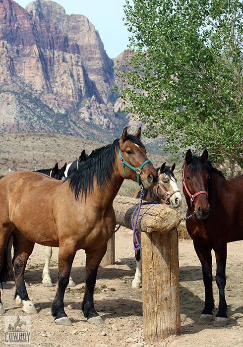 Cowboy Trail Rides - Horses at hitching post with Wilson Cliffs in the background